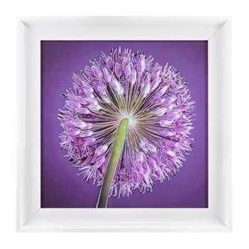 Allium Right Liquid Art (H50 x W50cm)