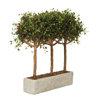 Angel Vine Pleached Tree - Green (54 x 60cm)
