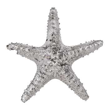 Asteroidea Decorative Starfish (25 x 25cm)