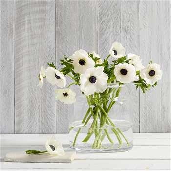 Aurelie Small Vase, Clear (22.5 x 21cm)