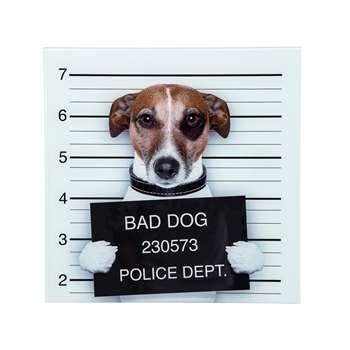 Bad dog glass wall art (40 x 40cm)