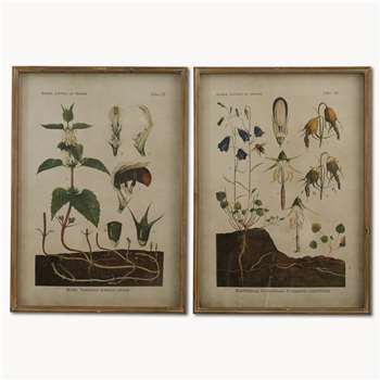 Brookby Set of 2 Framed Botanical Wall Art (H70 x W50 x D3.5cm)