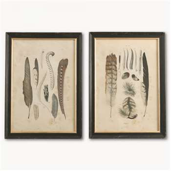 Brookby Set of 2 Framed Feather Wall Art (57 x 45cm)