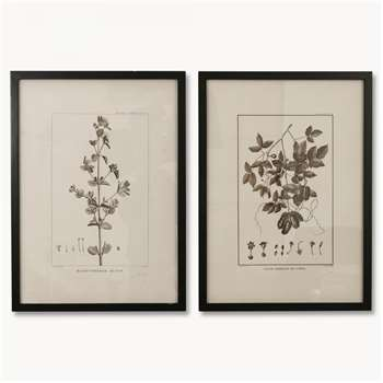 Brookby Set of 2 Leaf Prints in Black Frame (H73.5 x W53.5 x D1.8cm)