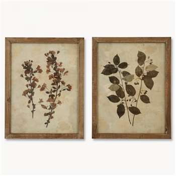 Brookby Set of 2 Leaf Prints in Wooden Frame - NO7043 (53.8 x 42cm)