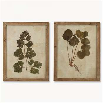 Brookby Set of 2 Leaf Prints in Wooden Frame - NO7044 (53.8 x 42cm)