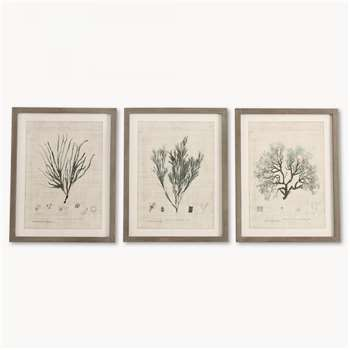 Brookby Set of 3 Framed Botanical Wall Art (60 x 46.5cm)