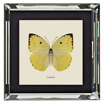 Brookpace, Entomology Collection - Catopsilia Framed Print (H46 x W46 x D4cm)