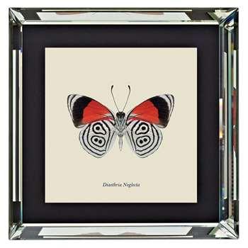 Brookpace, Entomology Collection - Diaethria Neglecta Framed Print (H46 x W46 x D4cm)