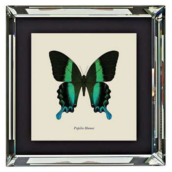 Brookpace, Entomology Collection - Papilio Blumei Framed Print (H46 x W46 x D4cm)