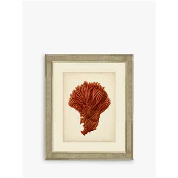 Brookpace, Red Coral I Framed Print & Mount, Red (H60 x W50 x D5cm)