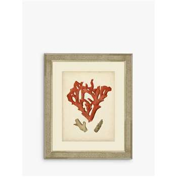 Brookpace, Red Coral II Framed Print & Mount, Red (H60 x W50 x D5cm)
