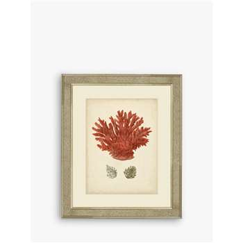 Brookpace, Red Coral III Framed Print & Mount, Red (H60 x W50 x D5cm)