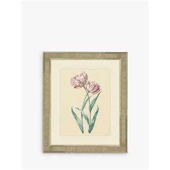 Brookpace, Tulips I Framed Print & Mount, Pink/Multi (H60 x W50 x D5cm)