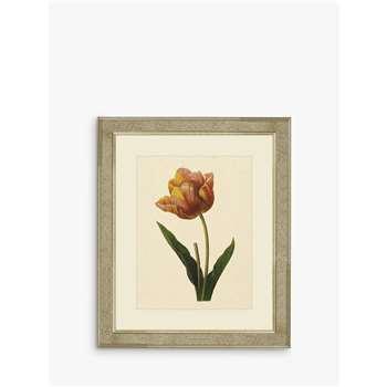 Brookpace, Tulips II Framed Print & Mount, Multi (H60 x W50 x D5cm)