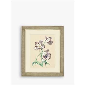 Brookpace, Tulips IV Framed Print & Mount, Multi (H60 x W50 x D5cm)