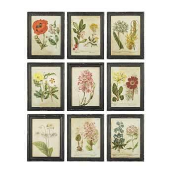 English Garden Framed Prints, Set of Nine - Multi (H36 x W28cm)