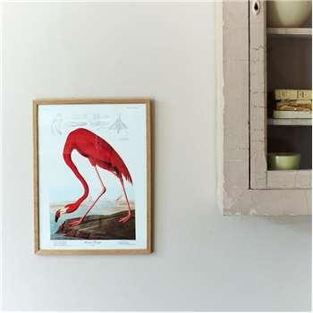 Framed American Flamingo Print (H42 x W32cm)