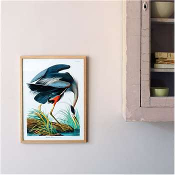 Framed Great Blue Heron Print (H40 x W30cm)