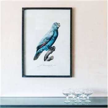 Framed Left Facing Blue Parrot Print (H70 x W50 x D2.5cm)