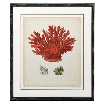 Framed Red Coral Print (H71 x W60cm)