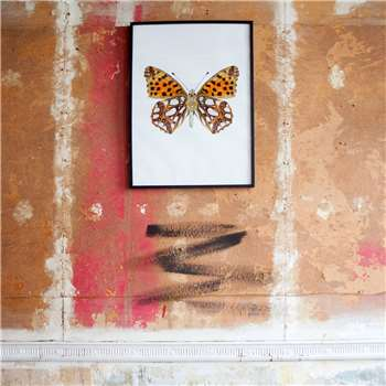 Large Wooden Framed Butterfly Print - Issoria Lathonia (H72 x W52 x D2cm)
