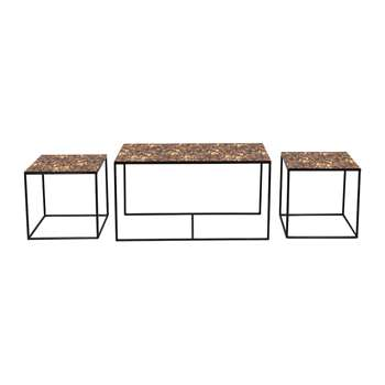 Notre Monde - Tortoise Trinity Coffee Table - Set of Three (H45 x W85 x D45cm)