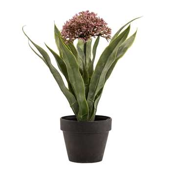 Purple Scilla in Pot (25 x 25cm)