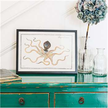 Small Framed Octopus Print (H21 x W30cm)
