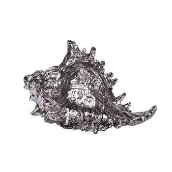 Strombus Shell - 'Silver' (15 x 20cm)