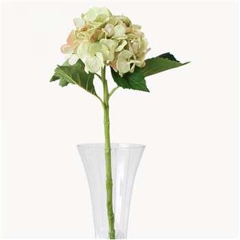Sunbury Green Hydrangea (Height 50cm)