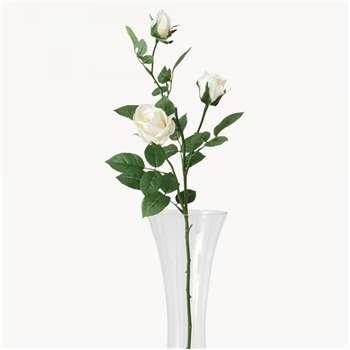 Sunbury Vanilla Rosebud (Height 77cm)