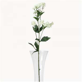Sunbury White Astrantia (Height 77cm)