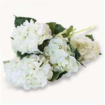 Sunbury White Hydrangea (Height 50cm)