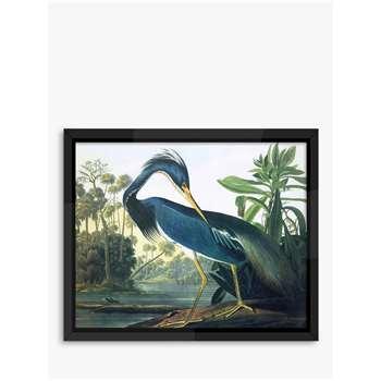 Tropical Bird II - Audubon Framed Print, Blue (H46 x W56 x D5cm)