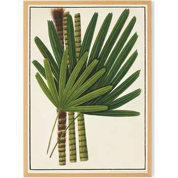 Vintage Botanical by the Natural History Museum Framed A1 Wall Art Print, Green (H87 x W62.5 x D2cm)