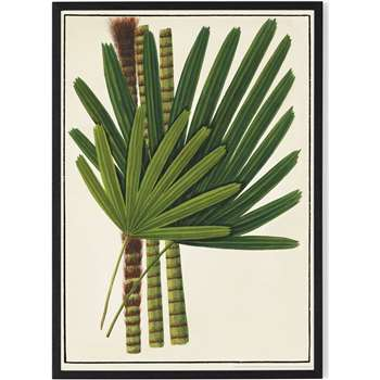 Vintage Botanical Leaves from the Natural History Museum Framed A1 Wall Art Print, Green (H86 x W61 x D2cm)